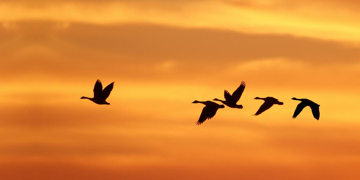 Birds flying against a sunset